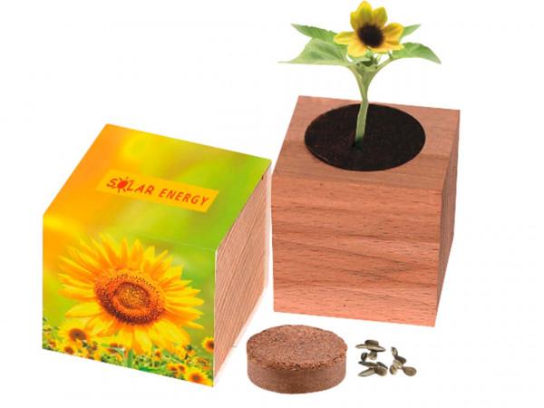 "Bio-Pflanzset ""Sonnenblume"""